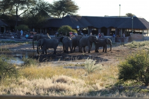 width=300 height=200></a><p id=caption-attachment-11269 class=wp-caption-text>Elephants playing at the waterhole</p></div><p></p><p>At around 10pm, they switch off all water and electricity and then it is just you and nature.</p><p></p><h2>Day 9: Chobe National Park</h2><p></p><p>After breakfast, they headed to Kasane, driving on the Elephant Highway of Botswana. After lunch they made their way to town for provisions and checked into their accommodation.</p><p></p><h3>Chobe National Park</h3><p></p><p>Declared in 1968, this park is known for its large herds of elephant and buffalo as well as many other animals such as giraffe, bushbuck, kudu, waterbuck and impala. Late afternoon, the group departed on a relaxing sunset cruise on the Chobe River, which is the lifeblood of this national park, as all animals come down to the river to drink and bathe. This river begins its journey in Angola, where it is called the Kwando before weaving its way across the Kalahari to become the Linyanti along the edge of Namibia and at Ngoma it becomes the Chobe River. Chobe is famous for its beautiful scenery, magnificent sunsets and abundance of wildlife and birdlife. They had another beautiful sunset on a relaxing game viewing boat cruise on the Chobe River. They had a delicious buffet dinner and made their way to bed.</p><p></p><div id=attachment_11501 style=