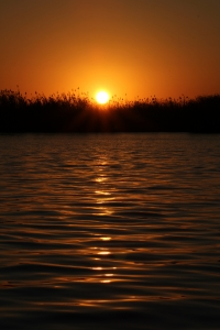 width=200 height=300></a><p id=caption-attachment-11273 class=wp-caption-text>Sunset on the Chobe River</p></div><p></p><p>Back at the lodge, we had a delicious dinner. When one of our guests made her way to her room after dinner, she encountered a massive elephant bull in front of their room! She was literally star-struck! But couldn't stop talking about their experience.</p><p></p><h3>Day 8: En route to Zimbabwe</h3><p></p><p>Our guests woke up early to go on a game drive in Chobe National Park. Here they spotted many animals of which the leopard was their favorite! They could now tick of the last animal the big 5 list.</p><p></p><p>They had a delicious breakfast and made themselves ready for Zimbabwe.</p><p></p><p>From here we handed our guests over to another very capable company to accompany them in Zimbabwe.</p><p></p><h3>Day 9 – 11</h3><p></p><p>Our guests from Netherland had one amazing time in Zimbabwe and couldn't stop talking about their experience. Victoria Falls (which was luckily filled with water) and the sunset boat cruise on the Zambezi River was off course on their favorites list! They were also spoiled with a delicious dinner on the cruise.</p><p></p><h2>Finished and back to Johannesburg</h2><p></p><p>Our guests had one amazing time in Botswana and Zimbabwe and flew straight back to Johannesburg. Safari With Us picked them up at the airport and dropped them off at their accommodation. They were EXTREMELY happy with their unforgettable trip and for days after, they couldn't stop talking about it.</p><p></p><div id=attachment_11274 style=