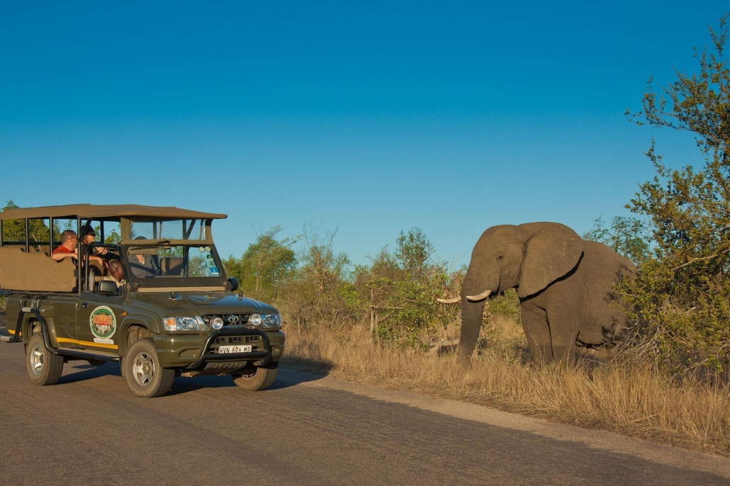 Elephant sighting on game drive