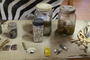 things-found-in-ostridge-stomach-on-high-gate-ostridge-farm