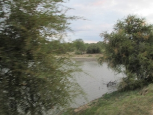 Dam in Balule Reserve