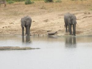 elephants-dam-kruger-park