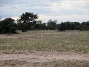 Open veld in Kruger Park