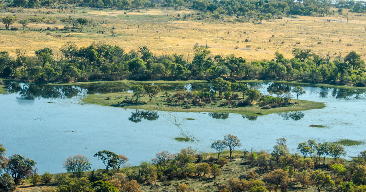 Approximately 70% of the islands in the Okavango Delta started out as termite mounds