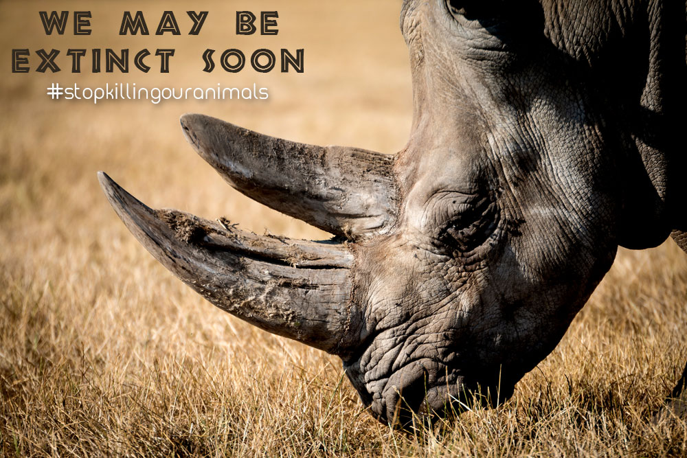 Save the Rhinos: African Wildlife Conservation