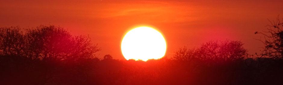Sunset Game Drive at Kruger National Park