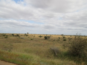 Kruger park terrain and bushveld