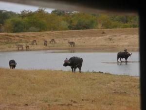 wild-animals-water-hole