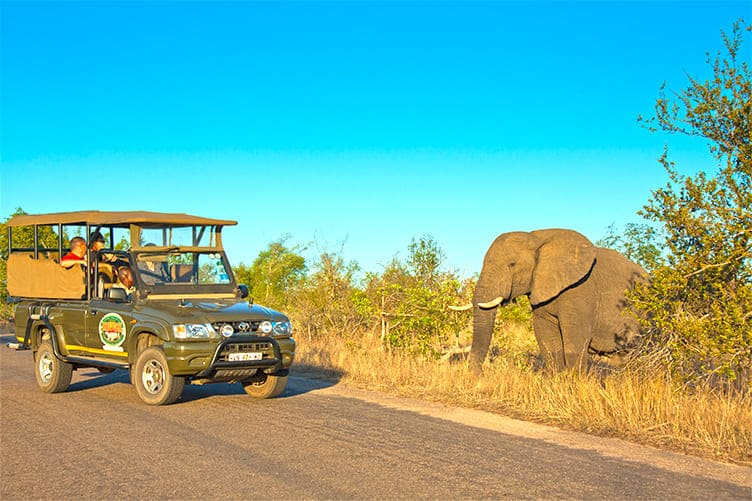 Game drive in Kruger National Park