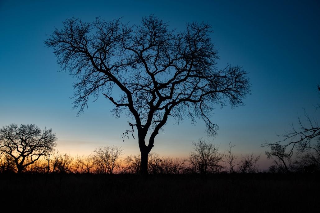 Manyeleti reserve