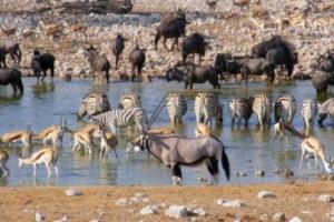 Wildlife Etosha Waterhole